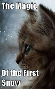 Funny Snow Meme - the magic of the first snow lolcats lol cat memes funny