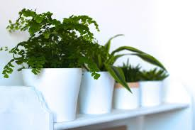 Inside Home Plants by Bringing Nature Inside With House Plants Jess Soothill