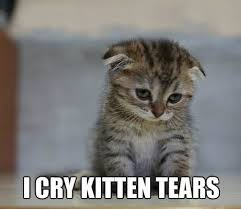 Sad Kitten Meme - list of synonyms and antonyms of the word kitten sad face meme