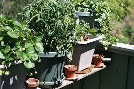 apartment vegetable garden home design