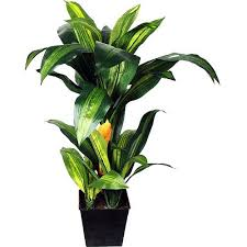 Tropical Potted Plants Outdoor - 225 best tropical plants images on pinterest tropical plants