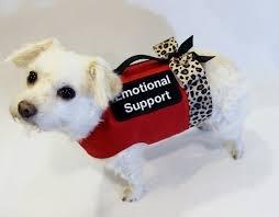 emotional support dog training in northern virginia dog training