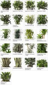 good houseplants for low light lighting for indoor plants