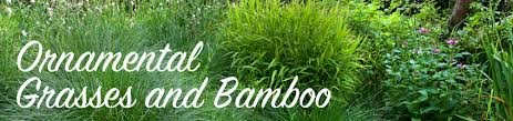 buy ornamental grasses and bamboo bakker