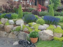 catchy collections of mini rock garden ideas perfect homes
