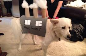 photos fabulous halloween costumes for your pet