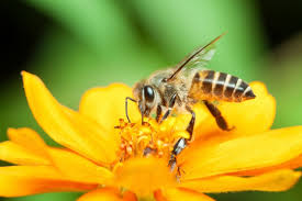 Flowers Bees Pollinate - 6 reasons bees are your bff earth rangers wild wire blog