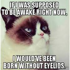 Grumpy Cat Sleep Meme - 67 best grumpy cat images on pinterest cats grumpy cat and grumpy