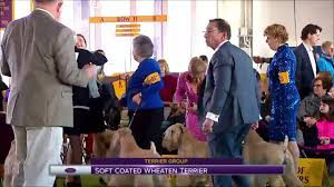 what is the dog show on thanksgiving best in show video westminster kennel club