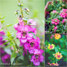 planting with kids butterfly friendly plants for your garden