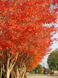 color landscape fall east texas gardening