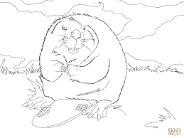 cute north american beaver coloring page free printable coloring