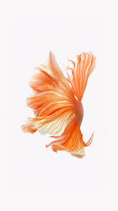 how to get apple u0027s live fish wallpapers back on your iphone in ios