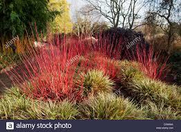 cornus stems ornamental grasses lawn large ponds woodland fields