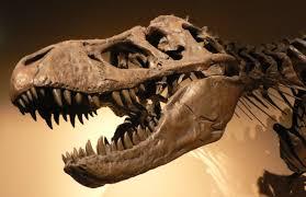 molecular paleontology wikiwand