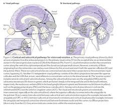 Cortical Blindness May Result From The Destruction Of Academic Onefile Document Neural Bases Of The Non Conscious