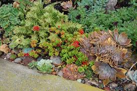 Rock Garden Cground Succulents Rock Garden Rock Gardens Ground Covers Pinterest
