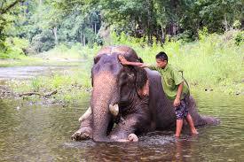 elephant trekking ban is it a gray area adventure com