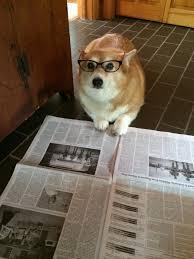 Dog With Glasses Meme - bark by halotroll meme center