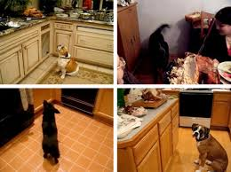 dogs who want turkey serious eats