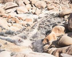 joshua tree desert home decor desert wall art desert