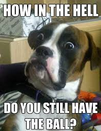 Dogs Memes - the 100 funniest dog memes of all time gallery