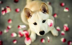 cute dog wallpapers adorable dog photos cute dog pictures 16 hd wallpapers fan