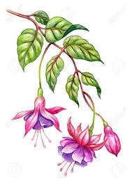 watercolor floral botanical illustration green leaves wild