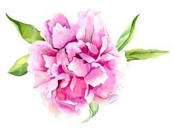 peony flowers pink peony flower print of original watercolor painting