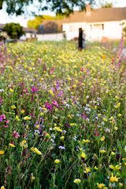 1335 best wild flower meadows images on pinterest wild flowers