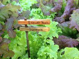Landscape Inspiration Garden Inspiration Clothespin Labels And Pallet Greenroofs