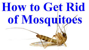 how to get rid of mosquitoes in yard house youtube