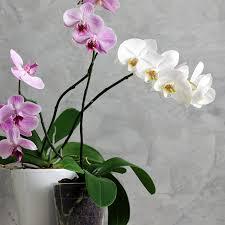 best plant for desk best house plants for your office desk pollennation