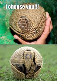 Armadillo Meme - armadillo memes best collection of funny armadillo pictures
