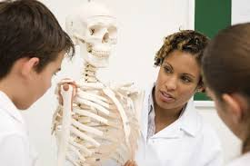 Study Anatomy And Physiology Online Anatomy And Physiology In The Online Classroom The Avidity