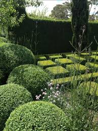 English Box Topiary - 181 best topiary images on pinterest formal gardens landscaping