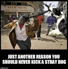 Advice Dog Meme Generator - image tagged in dog dogs dog memes dreads attack advice dog imgflip