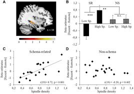 sleep spindle density predicts the effect of prior knowledge on
