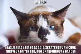 Nothing To Do Meme - there s nothing to do lolcats lol cat memes funny cats