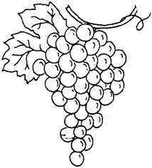 grape outline free download clip art free clip art on
