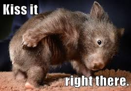 Wombat Memes - the clue meter tar feathers