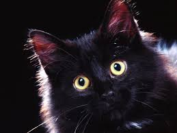 black cat halloween wallpaper 65 innocent cute cats high resolution wallpapers wallpapers