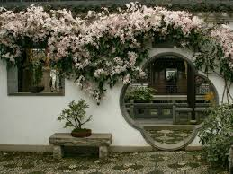 clematis armandii evergreen clematis world of flowering plants