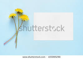 blank greeting card stock images royalty free images u0026 vectors