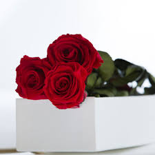 Roses In A Box Three Red Roses In A Silk Lined Gift Box Petals U0026 Roses