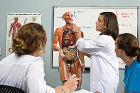 Human Anatomy And Physiology Courses Online Diploma In Human Anato Anatomy And Physiology Courses Online Free