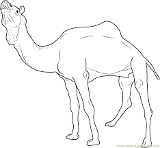 marrecha camel coloring page free camel coloring pages
