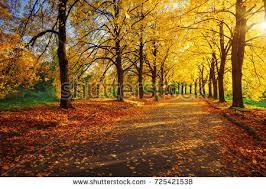 autumn city park colorful leaves sun stock photo 299947988