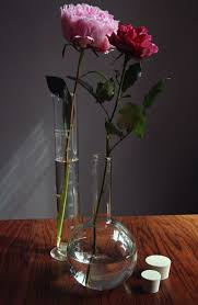 Test Tube Vase Holder 154 Best Test Tubes Images On Pinterest Test Tubes Botany And