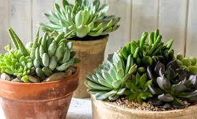 native plant nursery sydney the best places to buy plants in sydney concrete playground sydney